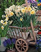 Cart with Narcissus 'Cragford',