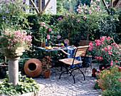Mandevilla, Solanum rantonnetii, mallow