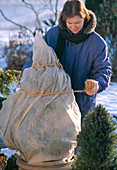 Sun protection for conifers, pack with fleece
