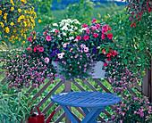 Impatiens hybrid, Dianthus