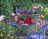 Potted balcony flowers and potted plants in spring