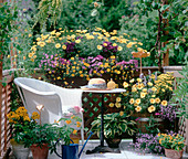 Argyranthemum 'Butterfly', Heliotropium 'Mini Marin'
