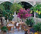 Mediterranean balcony with, Myrtus, Citrus limon