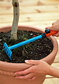 Loosen potting soil