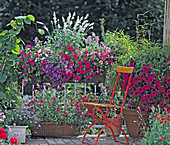 Salvia farinacea, Impatiens Wall., Phlox Drummondii