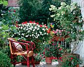 Impatiens hybrids, Hydrangea paniculata, Abutilon