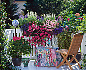 Box, Salvia farinacea 'Porcelain', Impatiens walleriana