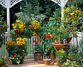 Late-summer cottage garden on the porch