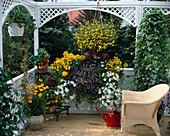 Coreopsis, Tomatoes, Calceolaria, Petunia, Torenia