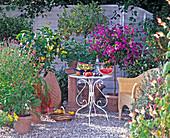 Chamaerops, Salvia, Russelia, Citrus, Cassia