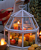 Halloween, ornamental gourds in glasshouse (Cloches) with candles