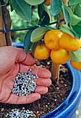 Citrus fruits intense and generous