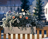 Fir branches and wooden flowers as winter decorations