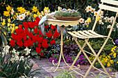 Spring bed, Tulipa 'Red Emperor', 'Golden