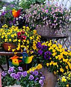 Viola wittrockiana, Viola cornuta 'Penny Yellow', 'Fama Blue'