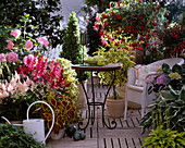 Shadow Terrace, Astilbe, Fuchsia,