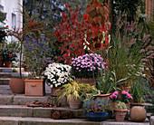 Stairway with Hakonechloa, Liquidambar, Caryopteris, Vitis, Coignetia, Pennis