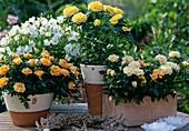 Mini roses yellow, orange arrangement