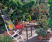 Fruit on terrace