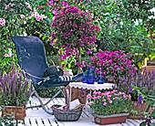 Salvia nemorosa, Bougainvillea glabra