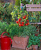 Tomato 'totem' and various herbs in the pot