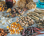Seeds v. top - ornamental corn, allium, papaver, lathyrus, pumpkin, tropaeolum