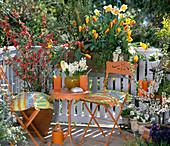 Chaenomeles speciosa, Tulpe 'California Sun',