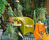 Terrasse mit Chlorophytum comosum / Grünlilie