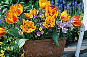 Tulipa 'Flair'