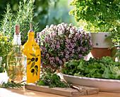 Salad herbs, rosemary officinalis, thymus, petroselinum