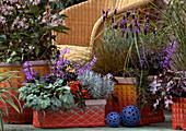 Clematis, Heuchera, Helichrysum, Capsicum, Cotoneaster, Lavandula, Stipa