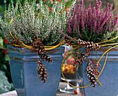 Calluna vulgaris 'Long White', 'Red October' (broom heath)