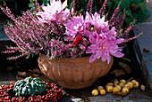 Calluna vulgaris 'Aphrodite', Colchicum hybrid 'Waterlily'