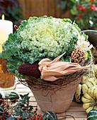 Brassica oleracea (ornamental cabbage, ornamental corn)