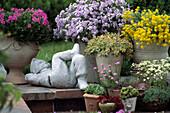 Rock garden in pots, Phlox, Alyssum, Phlox douglasii 'Red Admiral'