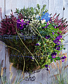Stainless wire basket, Calluna vulgaris, Pernettya, Viola