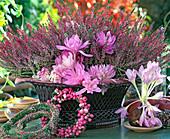 Calluna vulgaris 'Marlies', Colchicum autumnale 'Waterlily'