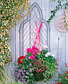 Stainless wire baskets (Wirework), Nemesia fruticans, Pelargonium