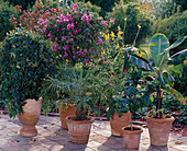 Plants that need to be kept warm at 15 ° C