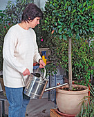 Check perennial potted plants for dryness every 8-14 days