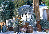 Woods with Bale Protection Outdoor Overwintering - Rhododendron, Pyracantha, Rose,