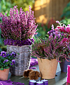 Erica gracilis 'Karlsson from the roof', Calluna vulgaris 'Marleen', Garden Girls