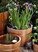 Iris kaempferi (iris), Hippuris (pine fronds)