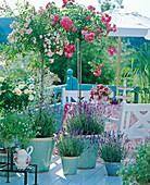 Patiorose 'Hampton Palace', high-stem rose 'Heidetraum'