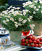 Argyranthemum frutescens, strawberries
