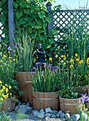 Wooden barrels with marsh plants, Trollius chinensis, Iris ensata
