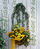 Wire basket with hedera (ivy), calendula (marigold),