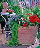 Pelargonium zonal hybrids' Noblesse ', Helichrysum' Sundaze