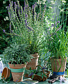 Salvia officinalis (sage), hyssop, garlic