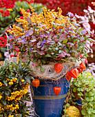 Pot with Ceratostigma plumbaginoides leadwort, Erica gracilis heath sprayed